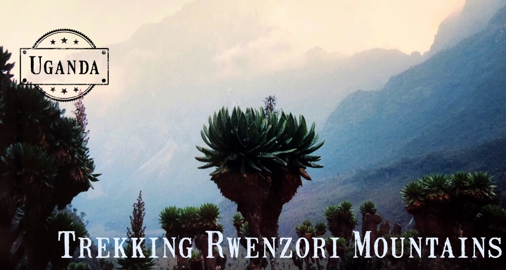 Rwenzori Mountains trekking