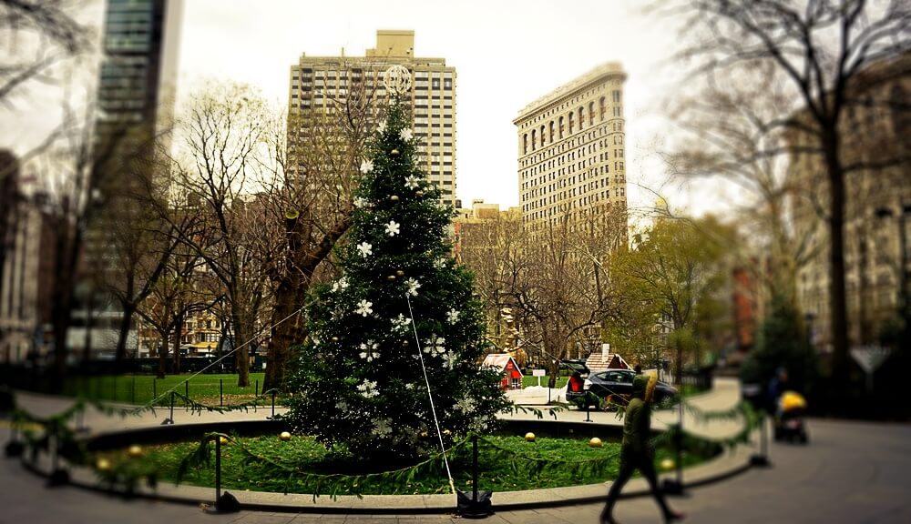 Madison Square park christmas tree nyc