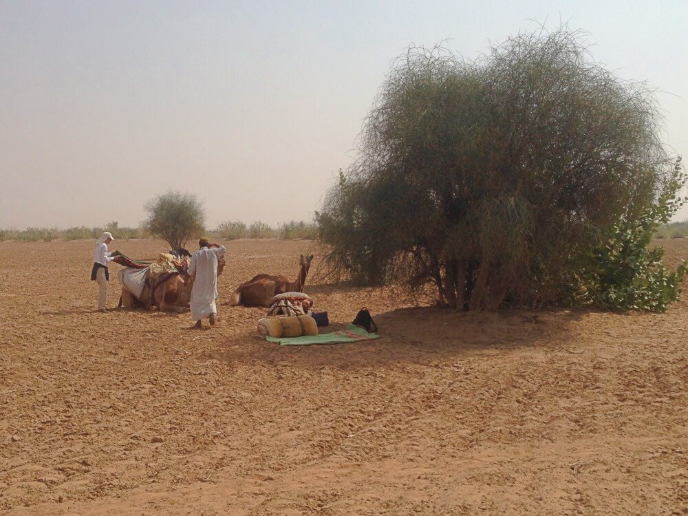 Camel safari setting up lunch camp