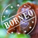 Orangutans Borneo
