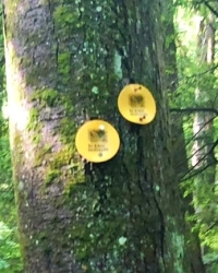 Trail markers right