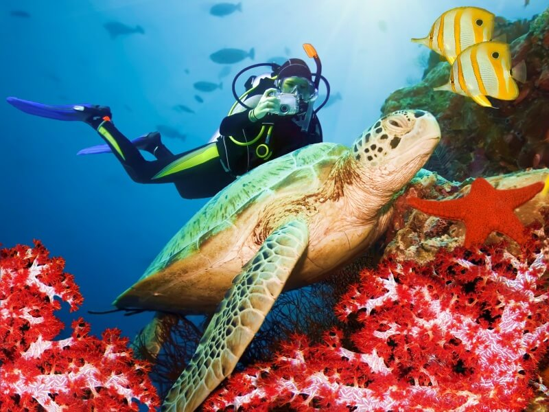 op things to do in Galapagos Diving and snorkeling to see sea turtles Galapagos Islands