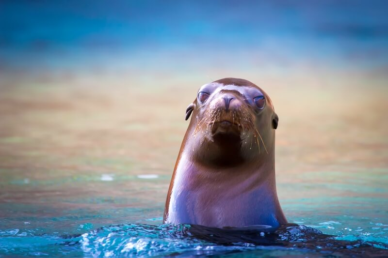 one of top 10 things to do in the Galapagos Islands is kayak past fur seals