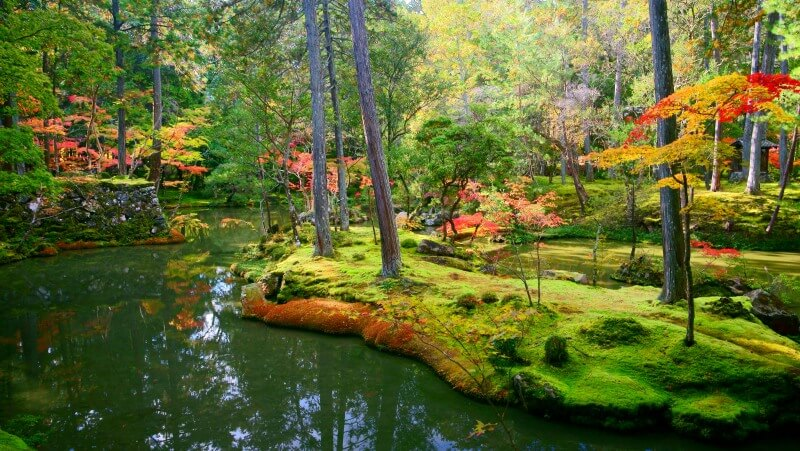 Moss Temple Kyoto